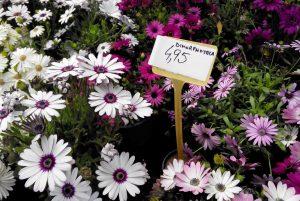 proceso flores 4b